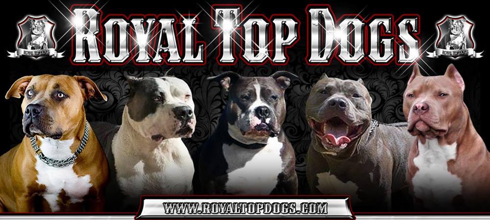 Royaltopdogs.com