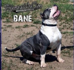 Riversideco Bane